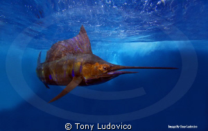 This was my first underwater photograph, as a professiona... by Tony Ludovico