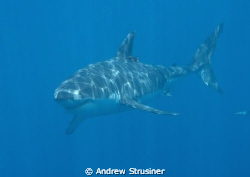 my firts dive trip in 3 years since my back injury.. grea... by Andrew Strusiner