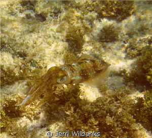 I had just completed a shore dive off Utila and was getti... by Jerri Wilbanks