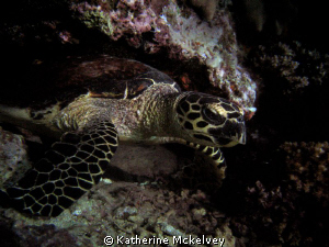 This shot is of a sea turtle.  The shot was taken on a ni... by Katherine Mckelvey