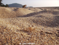 crab city on the beach at agonda reefmaster land and sea ... by John Johnson