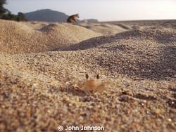crab city on the beach at agonda reefmaster land and sea ... by John Johnson
