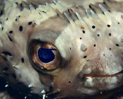 wow had a grat night dive with this little fellow stuck a... by Michael Odonnell