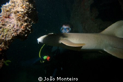 Unexpected nurse shark... awaken during night dive at St ... by João Monteiro