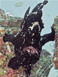 Frogfish does Samson by Jun Lao