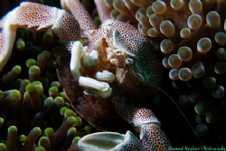 First dive in 2010 and theres such an abundance, a good s... by Bernard Maglana
