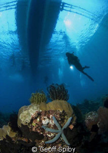 under the boat at the end of the dive by Geoff Spiby