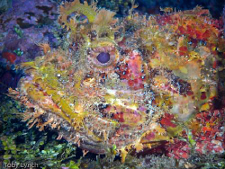 Scorpion fish, full frame. Taken 2 weeks ago on a holiday... by Toby Lynch