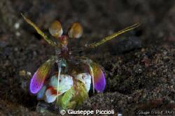 Rainbowed by Giuseppe Piccioli