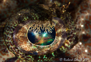 Crocodile Fish Eye-Raja Ampat by Richard Goluch