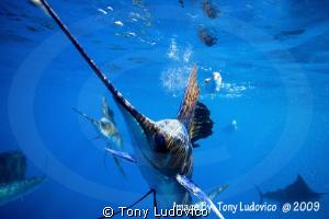 Close Call by Tony Ludovico