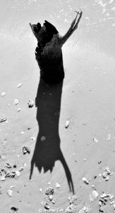 SHADOWS./Everglades Nat Park by Andres L-M_larraz