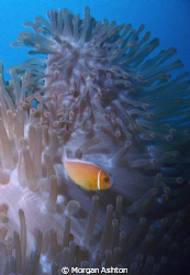 Taken some time ago at the Great Barrier Reef but only re... by Morgan Ashton