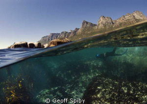 snorkelling below the 12 Apostles at Oudekraal, Cape Peni... by Geoff Spiby