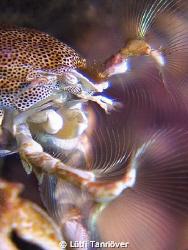 Hello Porcelain crab feeding by Lütfi Tanrıöver
