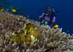 leaf/paper fish, Balicasag Island by Geoff Spiby