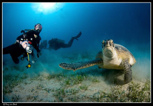 diver and green turtle. by Dray Van Beeck