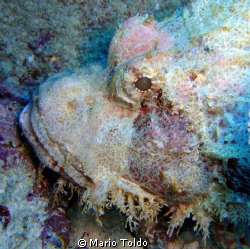 frightening monstre in the mauritian waters by Mario Toldo