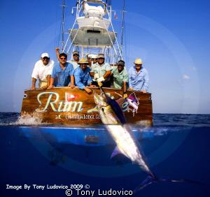 Rum Line by Tony Ludovico