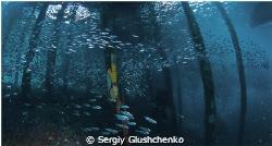 School fishes by Sergiy Glushchenko