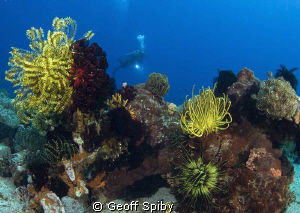 reefscene at Apo Island, Philippines by Geoff Spiby