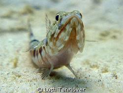 Hello.... A lizard fish watching me ...I guess... by Lütfi Tanrıöver