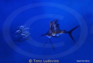 Isla Hunter by Tony Ludovico