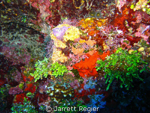 Bursting with Color! by Jarrett Regier