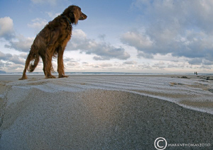 Sorcha on frozen sand.