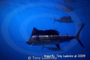 Hunters by Tony Ludovico