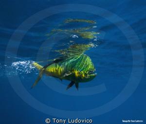 Cruising by Tony Ludovico