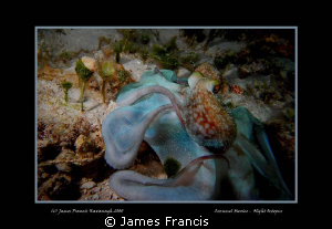 This octopus was taken at night with a Dx-1g Sea & sea ca... by James Francis