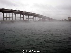 BLUE HERON BRIDGE 1/9/10.AIR TEMP 40 WATER 73 by Joel Sarver
