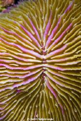 It is shot in Racha Yai Island Coral Reef.   by Kerim Sabuncuoglu