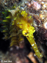 Seahorse, eye looks fake?  Canon G10, Inon macro lens, no... by John Hill