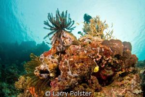 More beautiful reefs of The Solomon Sea. Nikon D300,Tokin... by Larry Polster
