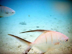 taken in Cozumel,Mexico. chased the fish around for about... by Rayna Tuero