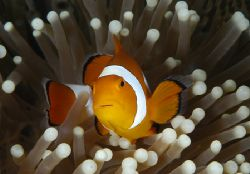 House Reef - Wakatobi by Claudia Pellarini