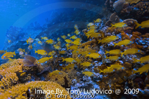 Bahamian Reef by Tony Ludovico