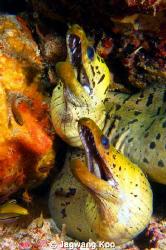 Moray eel by Jagwang Koo