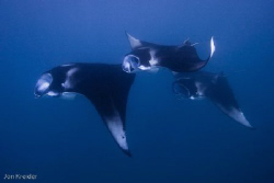 Mantas in Baa Atoll, Maldives by Jon Kreider
