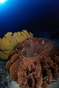 Barrell Sponge by Julian Cohen