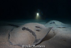 Close encounter with two stingrays @ Regona Cave... by João Monteiro
