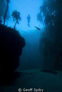 kelp snorkel, Cape Peninsula, Cape Town by Geoff Spiby