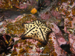 On my 2008 trip to the Galápagos Islands.  Chocolate Chip... by Frankie Rivera