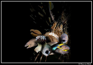 hungry for morays ... by Dray Van Beeck