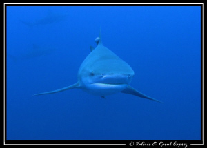 Face to face with the Bull shark in Protea Banks. by Raoul Caprez