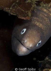 inquisitive moray by Geoff Spiby