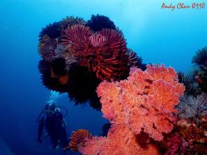 Padang Bai  - Bali.  Canon G9 + Nikonos SB 105 + Big eye... by Andy Chan