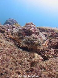 A scorpionfish.... by Lütfi Tanrıöver